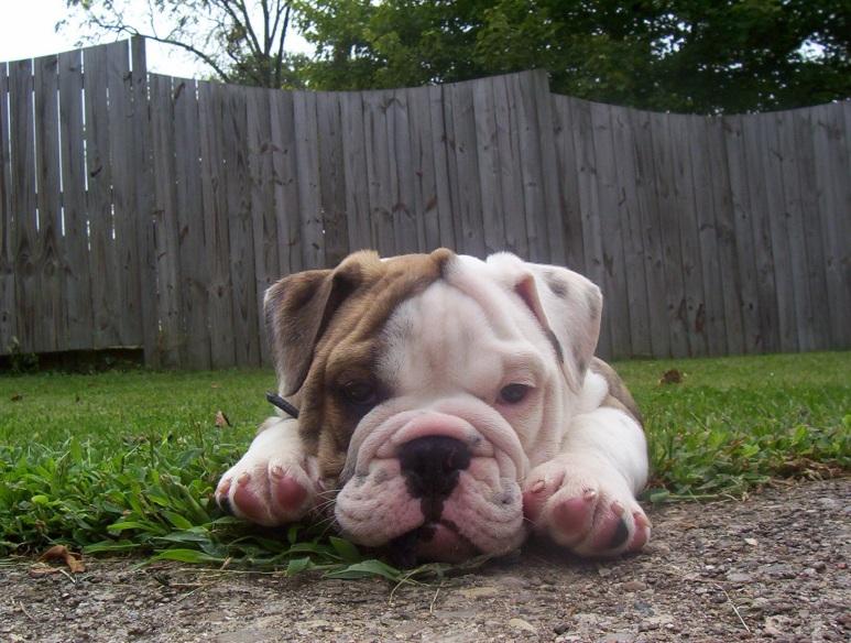 Rufus' 1st Week Home